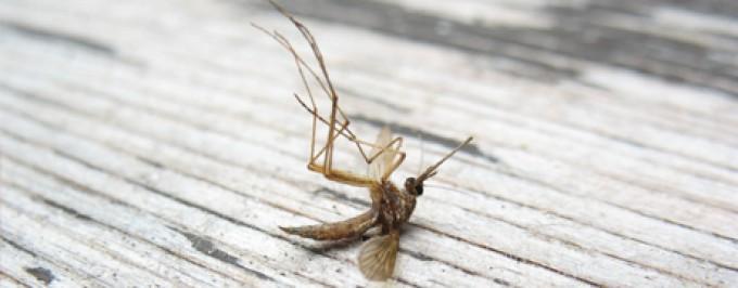 Testujemy czy komara da się załatwić na czysto